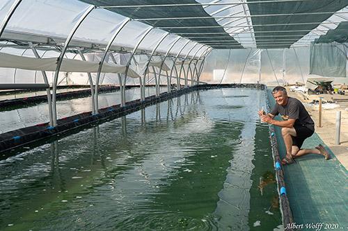 Ferme de Spiruline paysanne dans le Jura - le Spirulinier Comtois